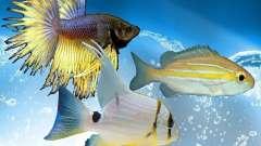 Nuevos peces (océano)