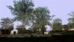 La textura de los árboles de la MGR